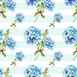 Blue jasmine illustration seamless pattern Stock Photography