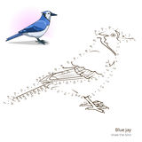 Blue jay bird learn to draw vector Royalty Free Stock Photo
