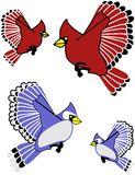 Blue Jay and Cardinal. Songbirds, clip art  and isolated Royalty Free Stock Photography