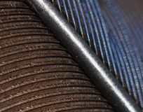 Blue Jay feather Royalty Free Stock Image