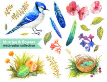 Blue jay and flowers collection Stock Photos