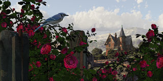 Blue Jay Among The Roses. A countryside Victorian mansion with climbing rose covered fence, and blue jay vector illustration