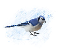 Blue Jay watercolor Stock Images