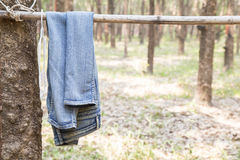 Blue jeans hang on bamboo in forest. Stock Image