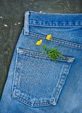 Jeans pocket with plant branch on the old wooden background. Mockup for design. Blue jeans pocket with plant branch on the old wooden background. Mockup for royalty free stock photo