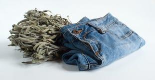 Blue Jeans und salvia auf Weiß Stockfotos
