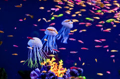 3 blue jellyfish Royalty Free Stock Images