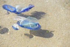 Blue jellyfish Royalty Free Stock Photos