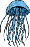 Blue jellyfish Stock Photos