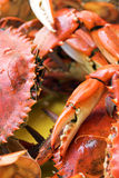 blue lagad mat krabba Royaltyfri Foto