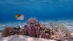 Blue lagoon of bora French Polynesia royalty free stock images