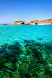 Blue lagoon Comino. Island Malta Gozo Stock Photos