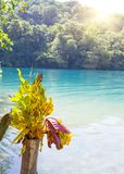 Blue lagoon on Jamaica in sunny day.  Royalty Free Stock Photo