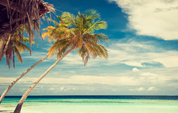 Blue lagoon.Palm trees. Royalty Free Stock Photography