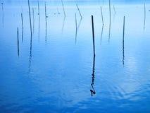 Blue lake. Plugs in the lake Stock Photos