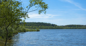 Blue lake. Scenic view of a danish forrest lake in the summertime Stock Photography