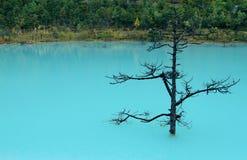 Blue lake. Beautiful blue lake of lijiang,yunan ,china Royalty Free Stock Images