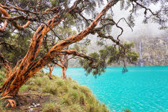 Blue Lake in the Cordillera Blanca. Blue lake and quenua tree in the Cordillera Blanca near Huaraz, Peru Royalty Free Stock Image