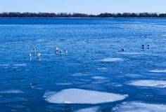 Blue lake covered with white ice Royalty Free Stock Image