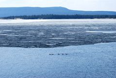 Blue Lake Ducks. Yellowstone Lake and waterfowl all as lateral lines Stock Photo
