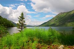 Blue lake, fern and mountains. Altay. Russia Stock Photo
