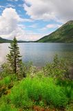Blue lake, fern and mountains. Altay. Russia Royalty Free Stock Photography