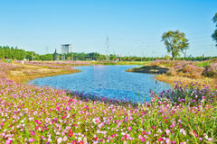 The blue lake and flowers in clusters Royalty Free Stock Image