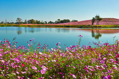 The blue lake and flowers Stock Image