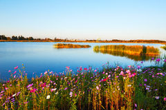The blue lake and flowers sunset Royalty Free Stock Image