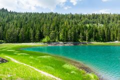 Blue lake and forest Royalty Free Stock Photos