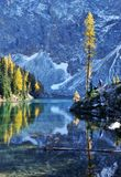 Blue lake with golden larch tree in autumn Stock Image