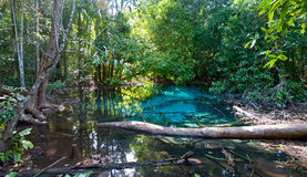 Blue lake in jungle Stock Photography
