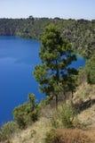 Blue Lake, Mount Gambier, South Australia. Pine tree on Blue Lake, Mt Gambier, Australia Stock Photos