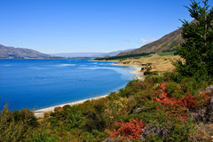 Blue Lake in New Zealand. Blue lake and colorful vegetation, New Zealand South Island Royalty Free Stock Photos