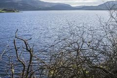 A blue lake, North Wales, the UK - naked branches. This image shows a blue lake in North Wales, the UK. It was taken on a sunny day in May 2018. It focuses on Stock Images