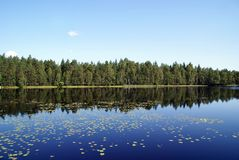 Blue Lake Reflections. Reflection of forest and waterlily leaves on the calm lake of Sorvasto in South of Finland Royalty Free Stock Photography