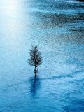 Blue lake and a tree Royalty Free Stock Image