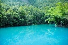 The blue lake and trees in forest royalty free stock photo