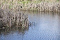 Blue Lake water green grass Royalty Free Stock Image