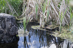 Blue Lake water green grass Stock Images