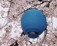 Blue lantern and flowers Royalty Free Stock Photos