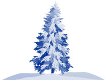 Blue large winter fir isolated on white. Illustration with winter fir isolated on white background Royalty Free Stock Image