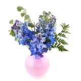 Blue Larkspur. Bouquet of Blue Larkspur in pink vase on white background Stock Images