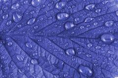 Blue leaf Royalty Free Stock Image
