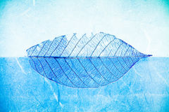 Blue leaf Stock Images