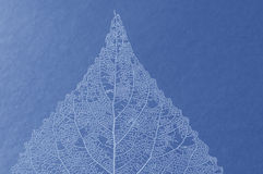 Free Blue Leaf Stock Photography - 535142