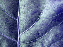 Blue Leaf Background. Leaf veins details on this blue colored background Royalty Free Stock Photography