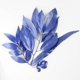 Blue leaf design elements. Decoration elements for invitation, wedding cards, valentines day, greeting cards. Isolated on white ba Stock Photos