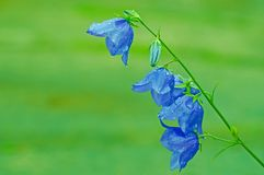 Blue, Leaf, Flora, Flower royalty free stock photos
