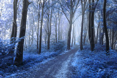 Blue leaves of the other world in foggy forest Royalty Free Stock Photo